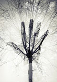 depositphotos_67952797-Male-hand-silhouette-over-sky-and-leafless-tree-pattern-
