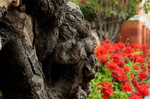Garden for Rose