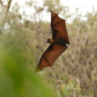 stock-photo-15325481-magnificent-bat