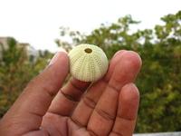sea-urchin-1380178