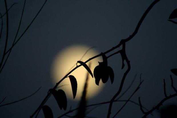 full-moon-1385329