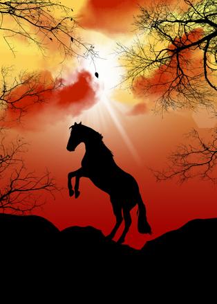 horse-1357437