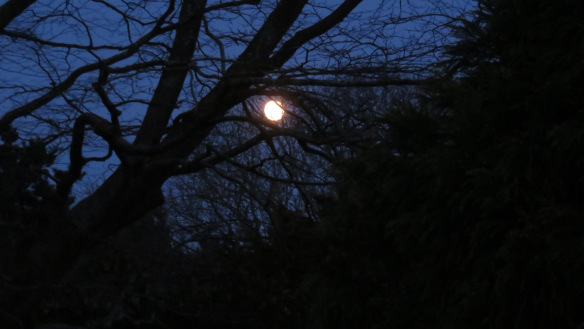Moon and beech